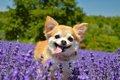 犬は何歳から長生き…の画像