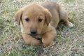 犬の水頭症の正しい…の画像
