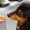 犬が拒食しても冷静…の画像