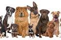 犬の大きさ 分類や…の画像