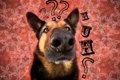 犬にダウン症はある…の画像