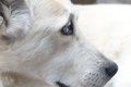 老犬の介護で疲れた…の画像