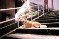 犬に階段の昇り降り…の画像