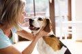 犬の里親トライアル…の画像