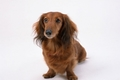 老犬の健康管理で気…の画像