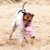 愛犬の誤飲の防止は…の画像
