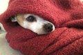 老犬の寒さ対策につ…の画像