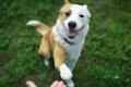 犬に効率的な学習を…の画像