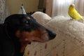 我が家の愛犬と小さ…の画像