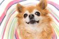 『Pet博2017 in幕張…の画像