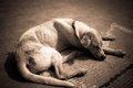 老犬が夜鳴きをする…の画像