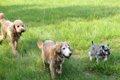 犬の習性を理解する!の画像