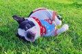 犬がいびきをする原…の画像