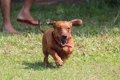 愛犬とジョギングを…の画像