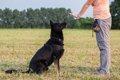 しつけ上手な犬の飼…の画像