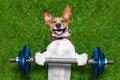 犬に体力をつけさせ…の画像