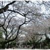 上野恩賜公園で犬と…の画像