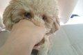 犬の噛む癖は直せる…の画像