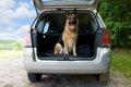 車に付いた犬の臭い…の画像