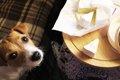 犬に乳製品を与える…の画像