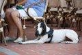 犬とドッグカフェに…の画像