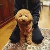 犬を迎えたらすぐに…の画像
