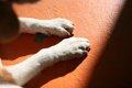 老犬の足腰の衰えか…の画像