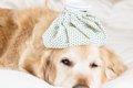犬用ドリンクは熱中…の画像