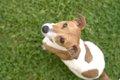 心に傷を負った犬に…の画像
