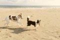 犬のお仕事!動物病…の画像