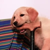 シニア犬になったら…の画像