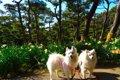 愛犬と一緒に三浦半…の画像