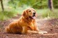 寿命が短い犬種3選の画像