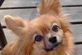 犬が飼いやすいペッ…の画像
