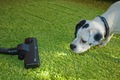 犬が掃除機に向かっ…の画像