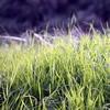 散歩道の草にも痒み…の画像