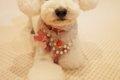 犬のおしゃれなグッ…の画像