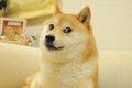 「飼いたい犬種」1位…の画像