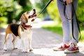 愛犬との上下関係は…の画像