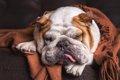 犬が睡眠不足になる3…の画像