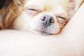 犬の安楽死について…の画像