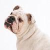 愛犬のその仕草…実は…の画像