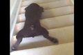 斬新!階段を腹這い…の画像