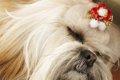 犬の鼻の色が変化す…の画像