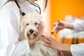 狂犬病の防接種の副…の画像