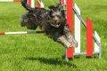 犬の競技会に出たい…の画像