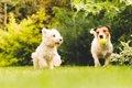 社交的な犬が見せる4…の画像