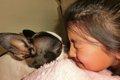 愛犬の口臭!症状か…の画像