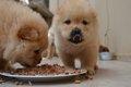 犬が食事中に唸る理…の画像