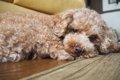愛犬の食いつきが悪…の画像
